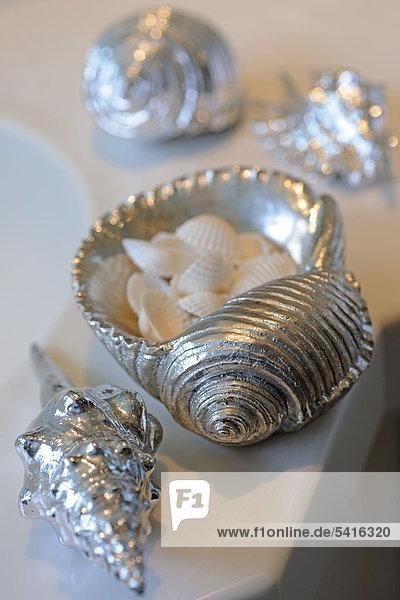 Dekorative Muscheln und Schneckenhaus