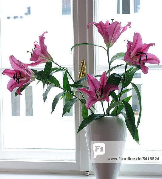 Rosa Lilien am Fenster