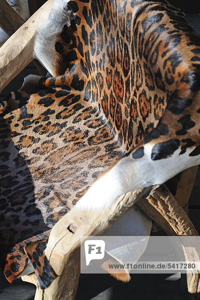 Leopard Panthera pardus