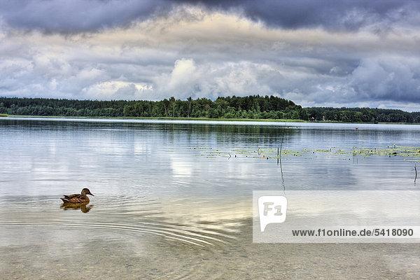 Baluso-See  Aukstaitijos Nationalpark  Litauen  Europa