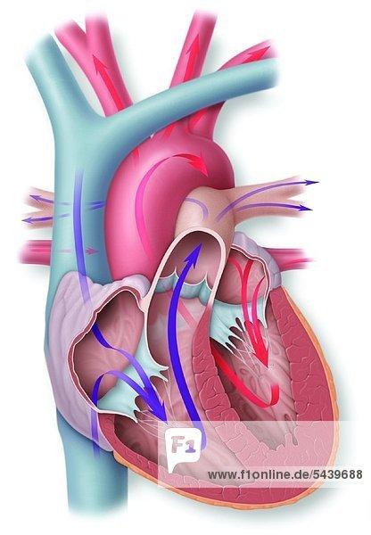 Illustration Medicine