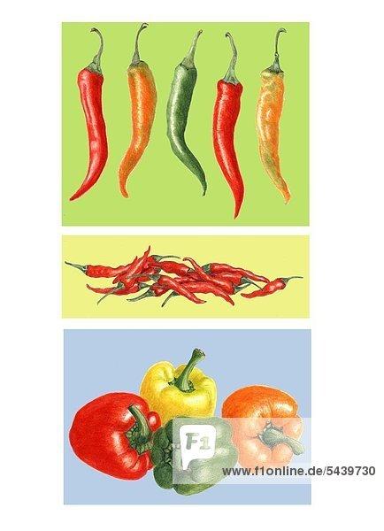 Peperonis  Chilis  Paprika  hingelegt  farbiger Hintergrund