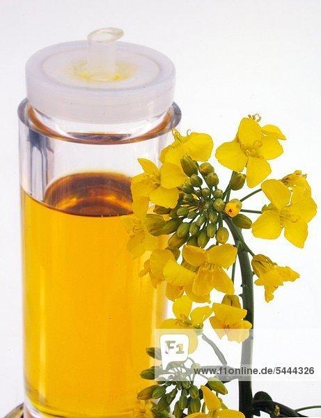 Raps Blüten und Rapsöl Raps besitzt einen hohen Öl- und Alphalinolensäuregehalt sowie der gesundheitlich bedenklichen einfach ungesättigten Fettsäure Erucasäure