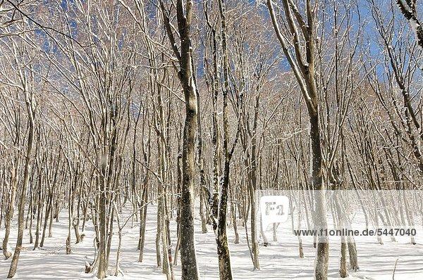 Holz Krim Ukraine
