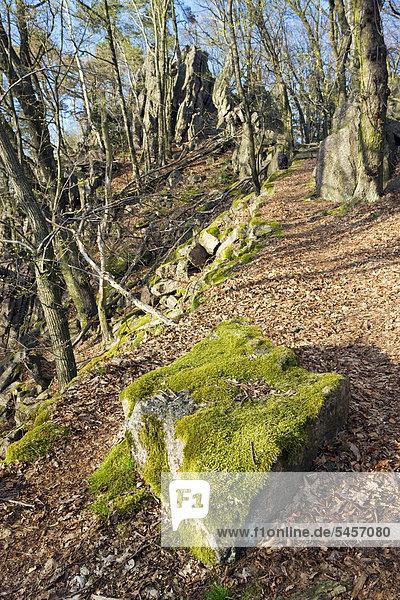 Naturschutzgebiet Babi Lom  Südmähren  Tschechien  Europa