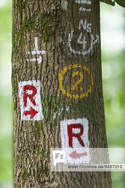 Kennzeichnungen an einem Baum für Wanderer  Odenwald  Hessen  Deutschland  Europa  ÖffentlicherGrund Kennzeichnungen an einem Baum für Wanderer, Odenwald, Hessen, Deutschland, Europa, ÖffentlicherGrund