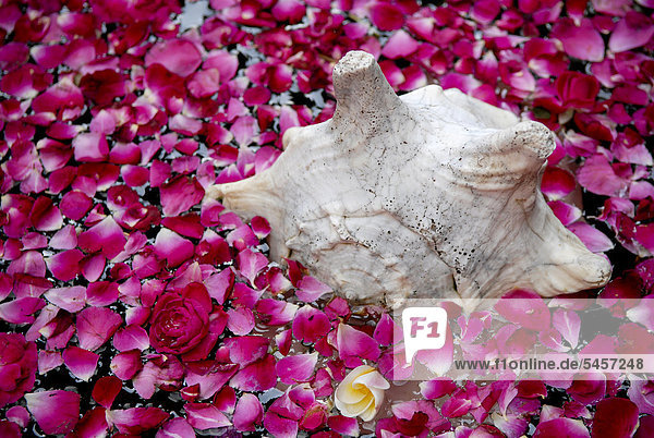 Shell and rose petals  Boutique-Hotel House of MG  India  Asia