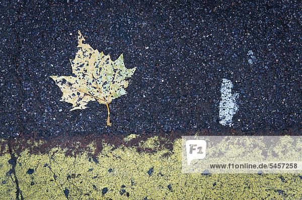 Blatt und Fahrbahnmarkierung  Brixton  London  England  Großbritannien  Europa
