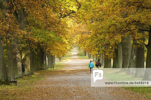 deutschland europa iblmcs02085888 hessen hofgeismar nordhessen reinhardswald tierpark. Black Bedroom Furniture Sets. Home Design Ideas