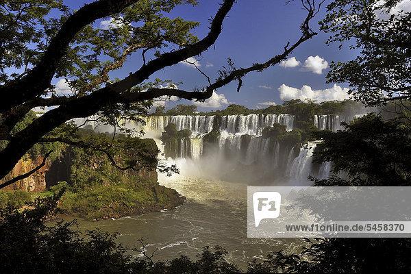 Cataratas del Iguazu  Iguazu Falls  Puerto Iguazu  Argentina - Brazil border  South America