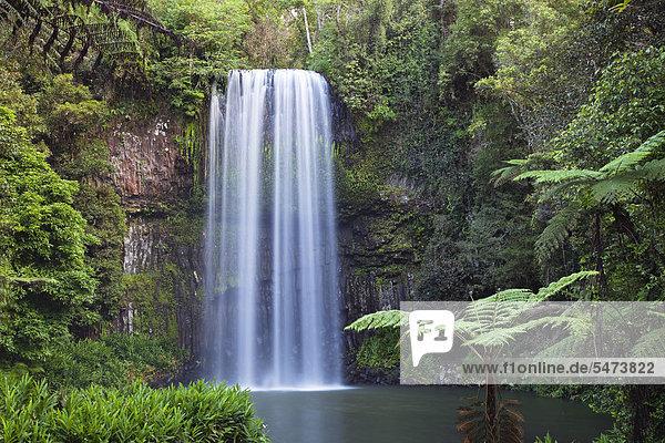 Millaa Millaa Wasserfall  Atherton Tablelands  Queensland  Australien Millaa Millaa Wasserfall, Atherton Tablelands, Queensland, Australien