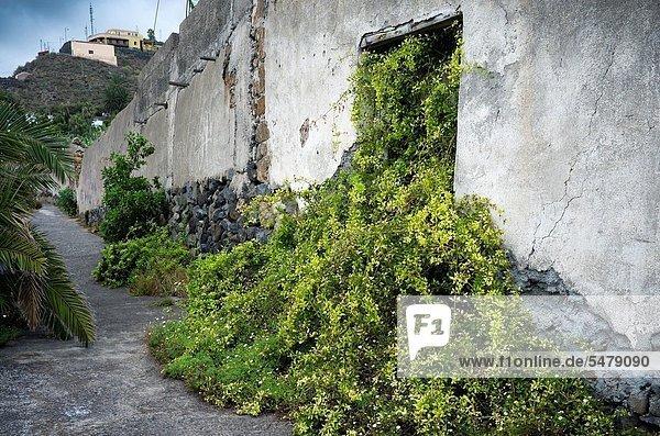 Botanik Wohnhaus verlassen Kanaren Kanarische Inseln Flut Spanien