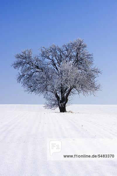 Winterlandschaft in der Nähe von Oldř