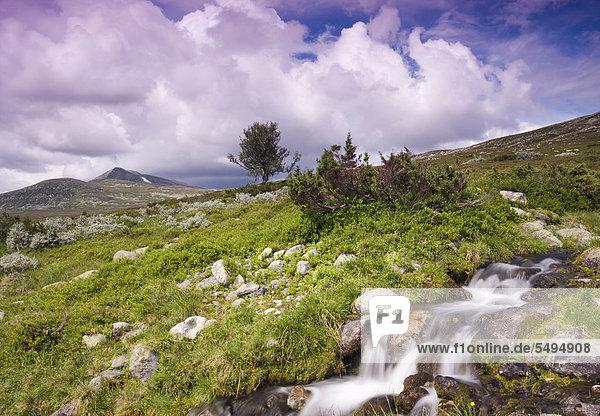 Landschaft mit dem Berg Elgahogna  Femundsmarka-Nationalpark  Provinz Hedmark  Norwegen  Skandinavien  Europa