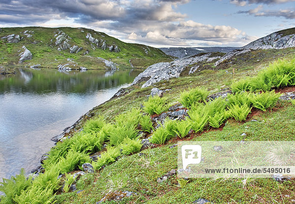 Eldbekkskardvatnet-See  Blåfjella-Skjækerfjella-Nationalpark  Nord-Trøndelag  Trondelag  Norwegen  Skandinavien  Europa