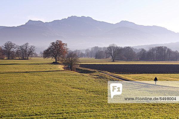 Frau läuft auf einem Weg  Landschaft mit Feldern  hinten die Kampenwand  Chiemgau  Oberbayern  Deutschland  Europa