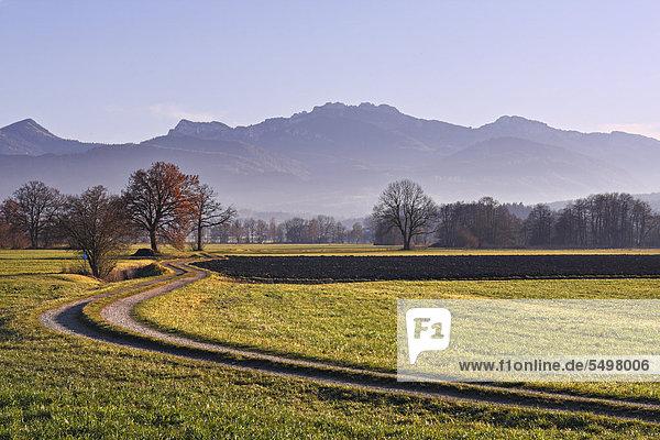 Landschaft mit Feldern  hinten die Kampenwand  Chiemgau  Oberbayern  Deutschland  Europa