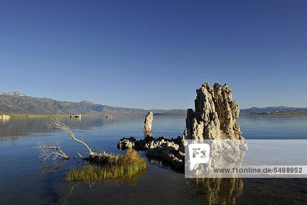 Tufa rocks  tufa  tufa rock formations  South Tufa Area  Mono Lake saline lake  Mono Basin and Range Region  Sierra Nevada  California  United States of America  USA