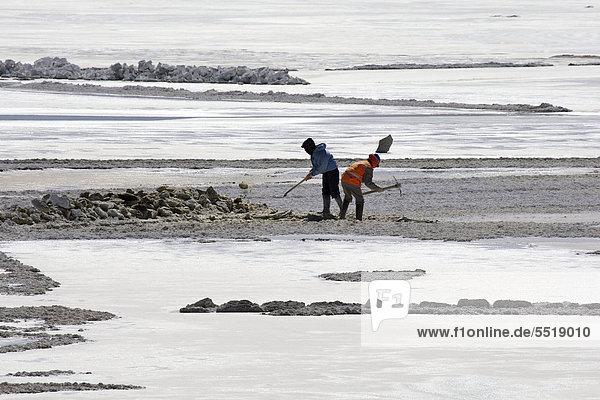 Salzarbeiter an einem Salzsee  Alti Plano  Potosi  südliches Bolivien  Südamerika