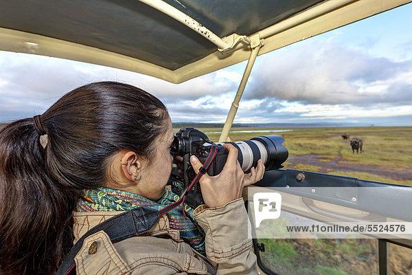 Junge Fotografin fotografiert einen Büffel aus einem Safaribus heraus  Lake Nakuru Nationalpark  Kenia  Ostafrika  Afrika  ÖffentlicherGrund