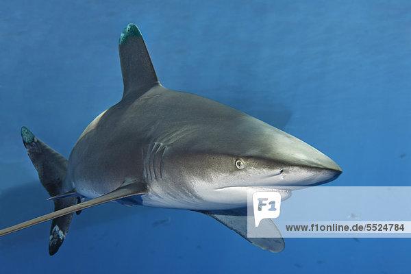 Wasser Schatten Boot blau Pazifischer Ozean Pazifik Stiller Ozean Großer Ozean Großes Barriereriff great barrier reef UNESCO-Welterbe Australien Cairns Queensland Hai