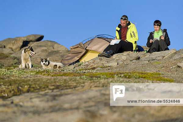 Touristen vor Zelt und freilaufende Huskies  Tasiilaq oder Ammassalik  Ostgrönland  Grönland