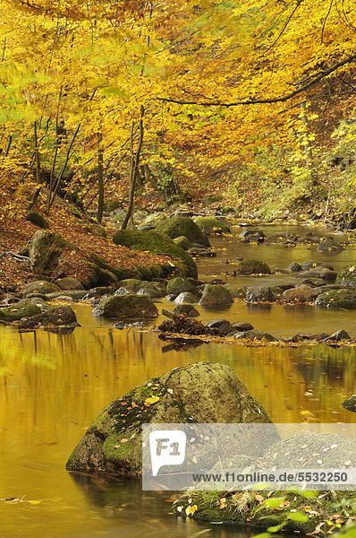 Bachlauf der Ilse im Herbst  Ilsetal  Harz  Sachsen-Anhalt  Deutschland  Europa Bachlauf der Ilse im Herbst, Ilsetal, Harz, Sachsen-Anhalt, Deutschland, Europa