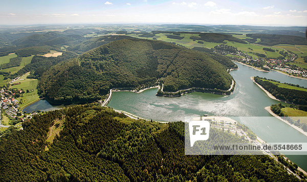 Beech forests at Diemelsee, North Rhine-Westphalia and Hesse, Germany, Europe