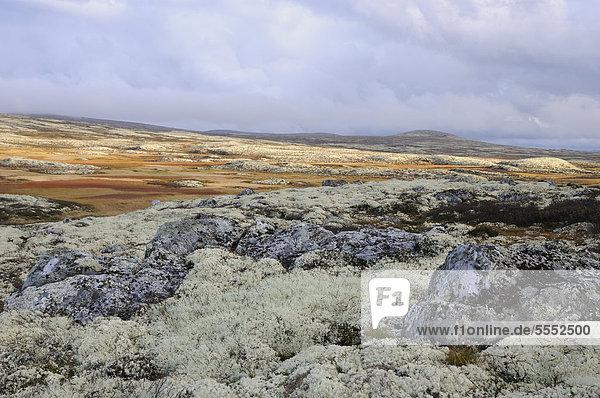 Fjelllandschaft im Herbst  Ringebufjellet  Norwegen  Europa