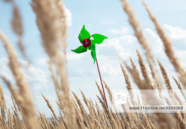Pinwheel stehend im Weizenfeld
