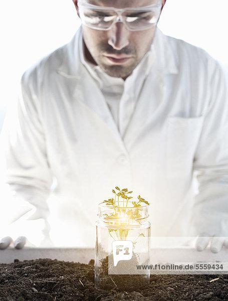 glühend  Glut  Wissenschaftler  Pflanze  Untersuchung