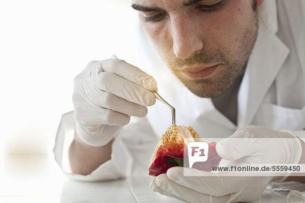Wissenschaftler untersucht Paprikasamen