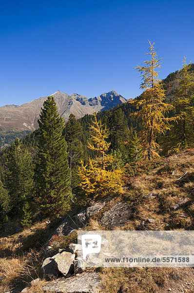 Autumn mountain landscape  Lehner Griesskoegel Mountain and Hairlacher Seekopf Mountain at the rear  Geigenkamm Ridge  seen from near Lake Brechsee  Pitztal  Tyrol  Austria  Europe