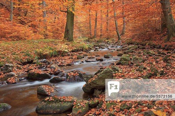 Ilse im Nationalpark Harz  Sachsen-Anhalt  Deutschland