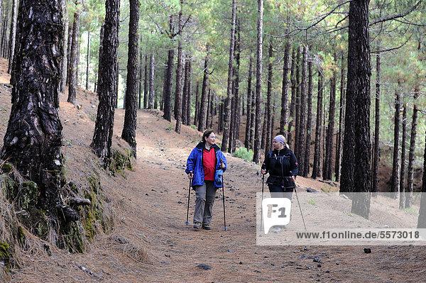 Zwei Frauen wandern durch einen kanarischen Fichtenwald  La Palma  Kanaren  Kanarische Inseln  Spanien  Europa  ÖffentlicherGrund