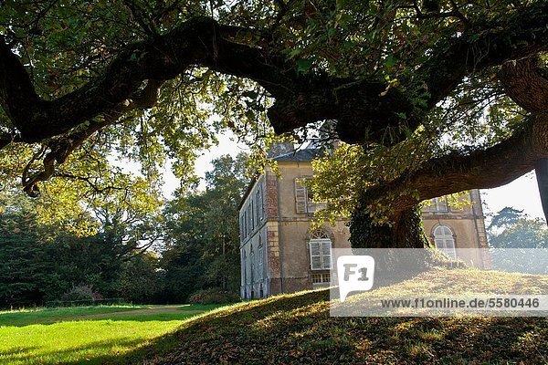 giant oak on the site has beaurepaire Augan. broceliande  Morbihan  Brittany  France
