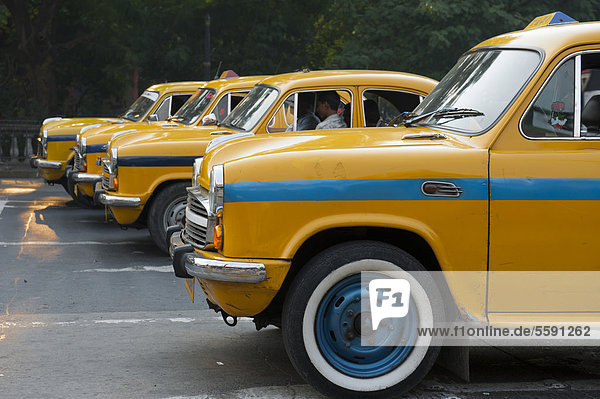 Transportation  four yellow Ambassador taxis in a row  Chowringhee  Calcutta  Kolkata  West Bengal  India  South Asia  Asia