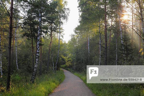 Deutschland  Bayern  Oberbayern  Region Rupertiwinkel  Blick auf das Schönrammoor bei Petting