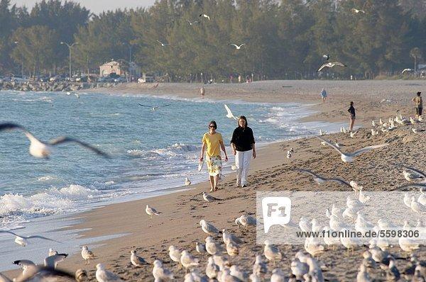 Frau  gehen  Strand  Küste  Vogel  2  Florida  Venedig