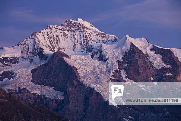 Abendstimmung an der Jungfrau  Blick von Schynige Platte  Berner Oberland  Schweiz  Europa Abendstimmung an der Jungfrau, Blick von Schynige Platte, Berner Oberland, Schweiz, Europa