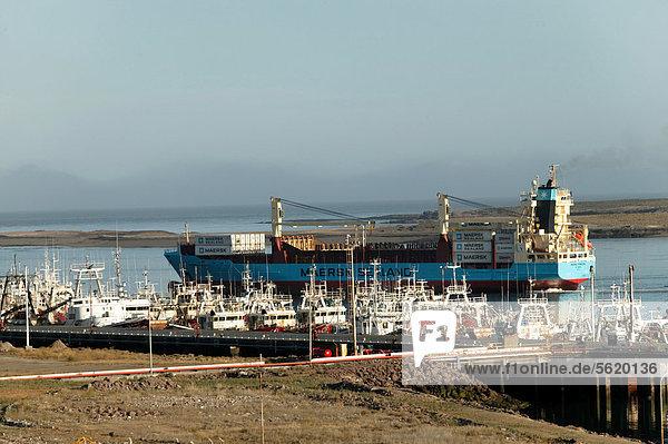 Puerto Deseado  Provinz Santa Cruz  Patagonien  Argentinien  Südamerika