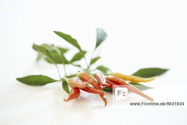 Rote Chilischoten mit Blättern