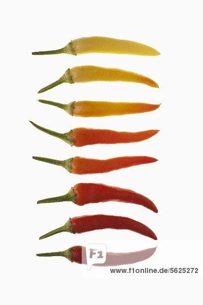 Reihe von Chilischoten (reif und unreif)
