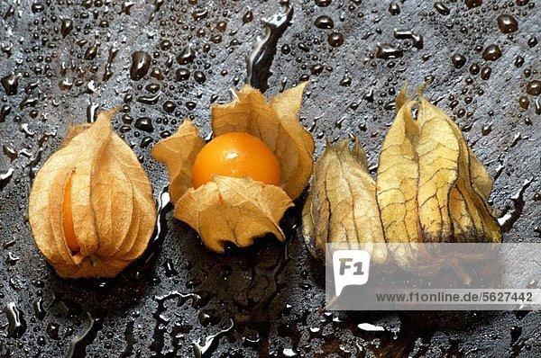 Vier Physalis auf nassem Holz Vier Physalis auf nassem Holz