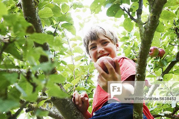 lächeln  Junge - Person  Baum  Frucht  aufheben