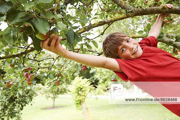 lächeln  Junge - Person  Baum  Frucht  klettern