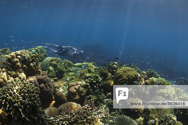 Schnorchler beim Schwimmen im Korallenriff