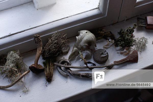 Verschiedene getrocknete Pflanzen und Artefakte auf einer Fensterbank