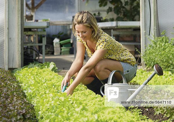 Junge Frau arbeitet in einem Salatbeet