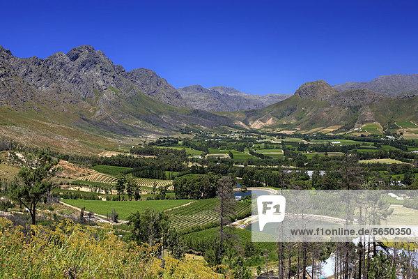 Franschhoek  Weinanbaugebiet  Kapregion  Westkap  Südafrika  Afrika